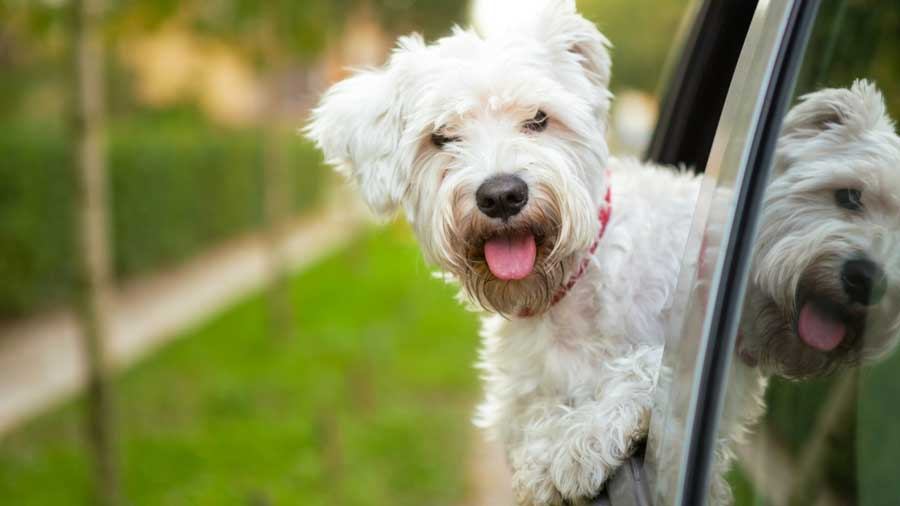 Summer Pet Travel Tips